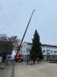 Weihnachtsbaum wird in der Ortsmitte aufgestellt