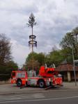 Der Maibaum steht auf dem Kirchplatz. Im Vordergrund steht die Drehleiter.